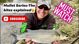 MULLET SERIES-THE BITES-EXPLAINED!