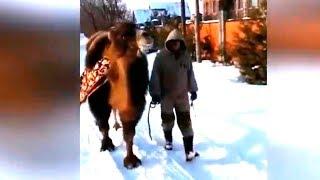 Верблюд для Дед Мороза! Как приучить верблюда к зиме? | Самые эпичные видео | Happy Head
