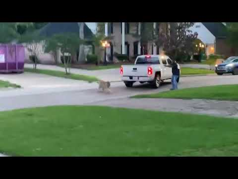 Tiger Roaming Houston Neighborhood Leads To Intense Standoff With Off-Duty Police Officer