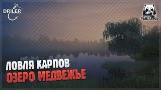 Ловля карпов. Озеро Медвежье. Стрим Русская рыбалка 4/Russian Fishing 4