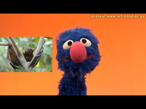 Aprende con Coco - Animales peligrosísimos