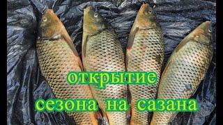 Каплица Открытие сезона на сазана на Дону Пьяная кукуруза работает Сектетный ингридиент от В