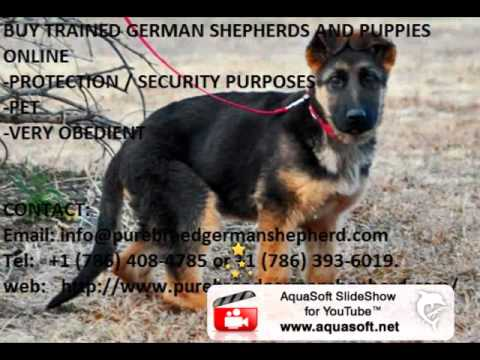 BUY TRAINED GERMAN SHEPHERDS/ PUPPIES ONLINE