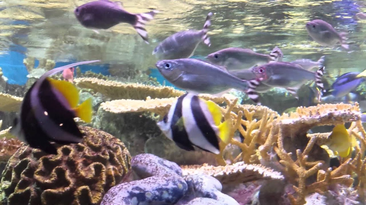 Fish in new aquarium - Fish Tank At The New England Aquarium 09 07 2015