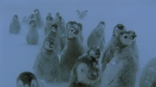 Penguins lost in a blizzard - Snow Babies - BBC One Christmas 2012