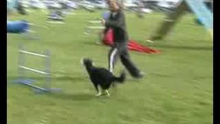 Winning Dog Agility Run