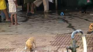 インドのとある駅のホームで撮影していた犬の親子の前に、突然現れた子...