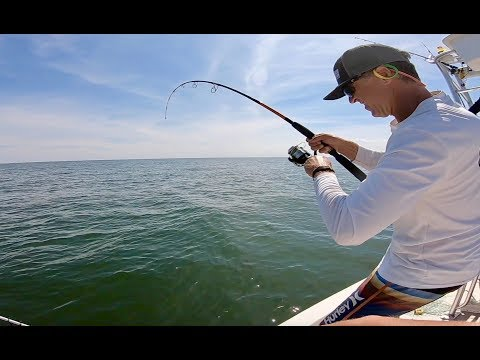 Sight Casting Cobia With Bucktail Jigs