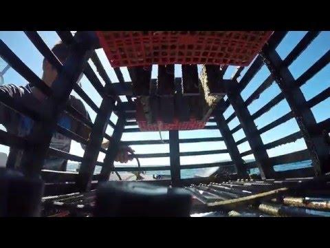 Go Pro  In My Craypot (Lobster Pot) Perth WA