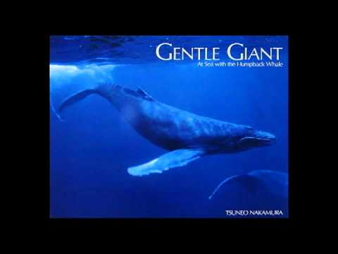 Gentle Giants of the Sea - Another Chance