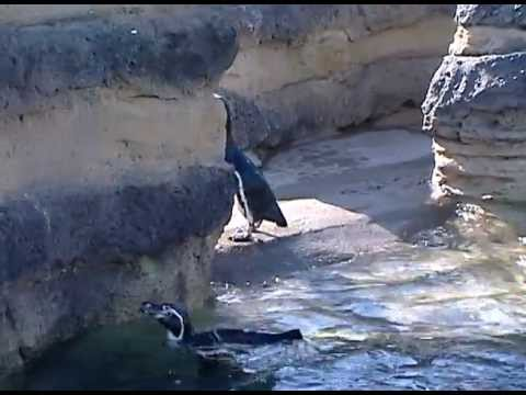 Penguins -- Keeping Them Cooled and Heated with Energy Conservation (closed caption)