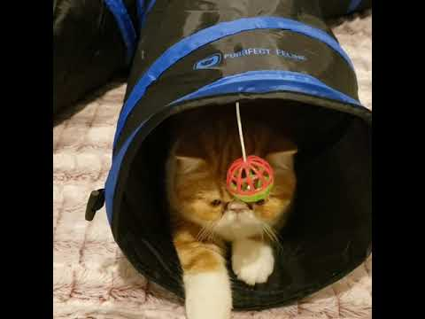 Collapsible 4-Way Cat Tunneland Catnip Fish Toys. Will My Cats Like Them?