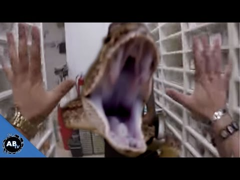 SNAKE ATTACK!! YOU WON'T BELIEVE WHAT HAPPENS!! SnakeBytesTV