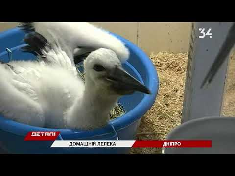 34 телеканал: В Днепре спасли аистенка