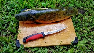 Catch And Cook Bowfin, Mudfish, Dogfish EXTREMELY SUPRISING OUTCOME!