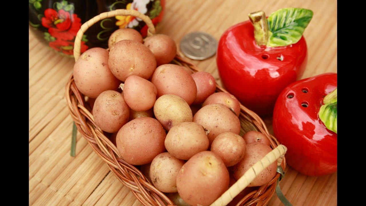 17 ноя 2017. В томском городе колпашево работают над селекцией цветных сортов картофеля.