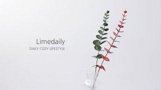 [라임데일리] 스노우 싱글 유칼립투스 조화 꽃 인테리어…