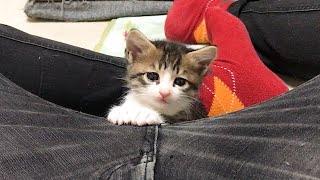 動くと可愛い顔で怒る子猫