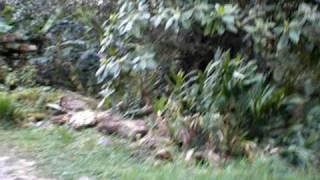 Haeske Raw Family (and friend) on El Pianista Trail near Boquete, Panamá