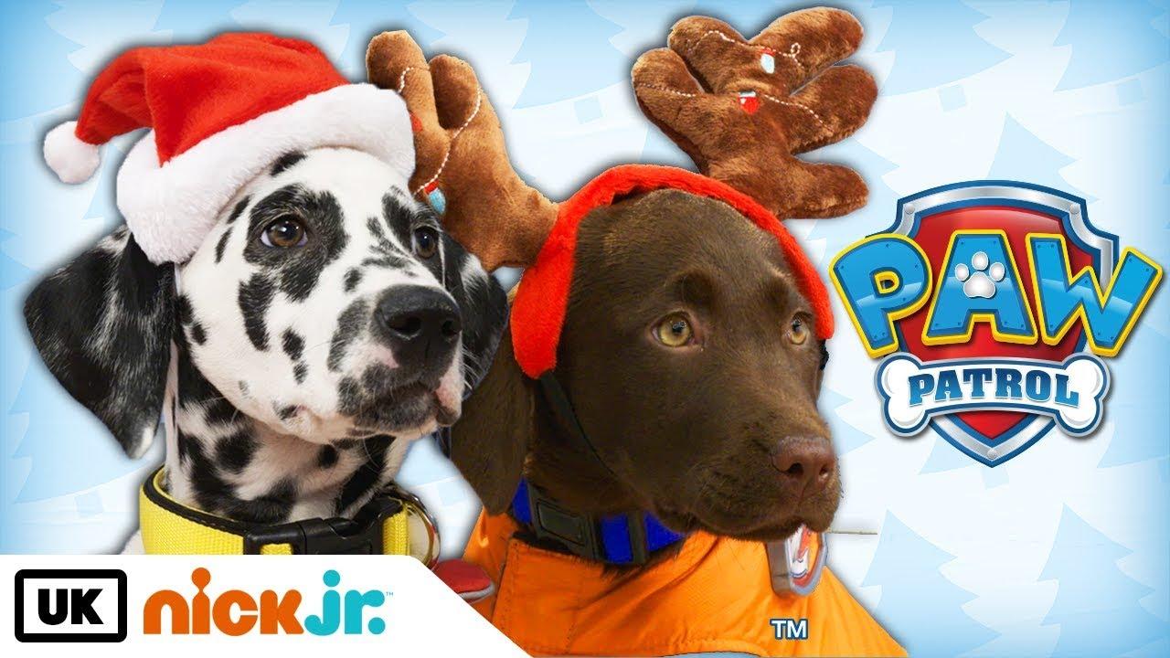 Download Paw Patrol   Real Pups Save Christmas   Nick Jr. UK