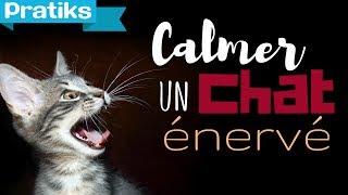 Conseils véto - Comment calmer un chat énervé ?