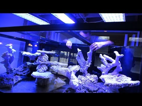 Building The Ultimate Reef Tank!!