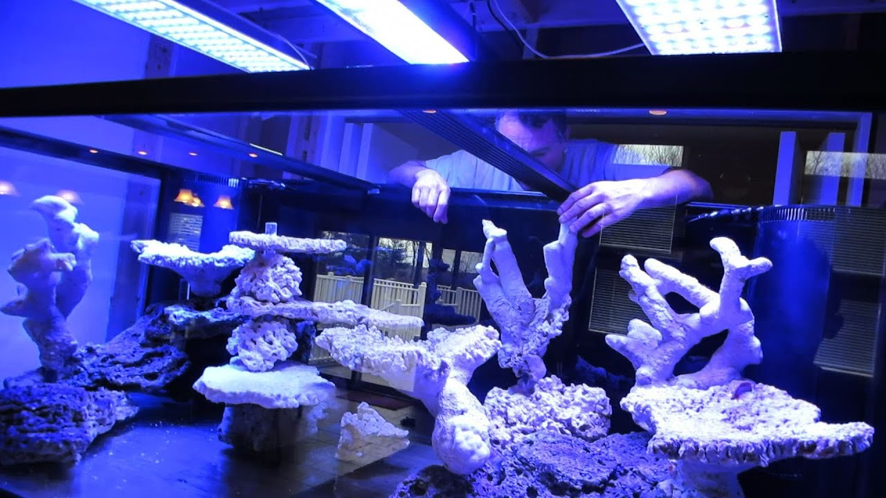 Building The Ultimate Reef Tank!! - YouTube