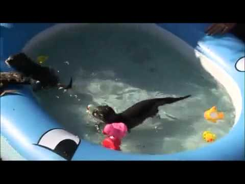 Baby Swimming - Babies love swimming underwater - YouTube