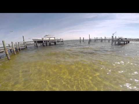 Sheepshead Fishing In Bradenton,Florida