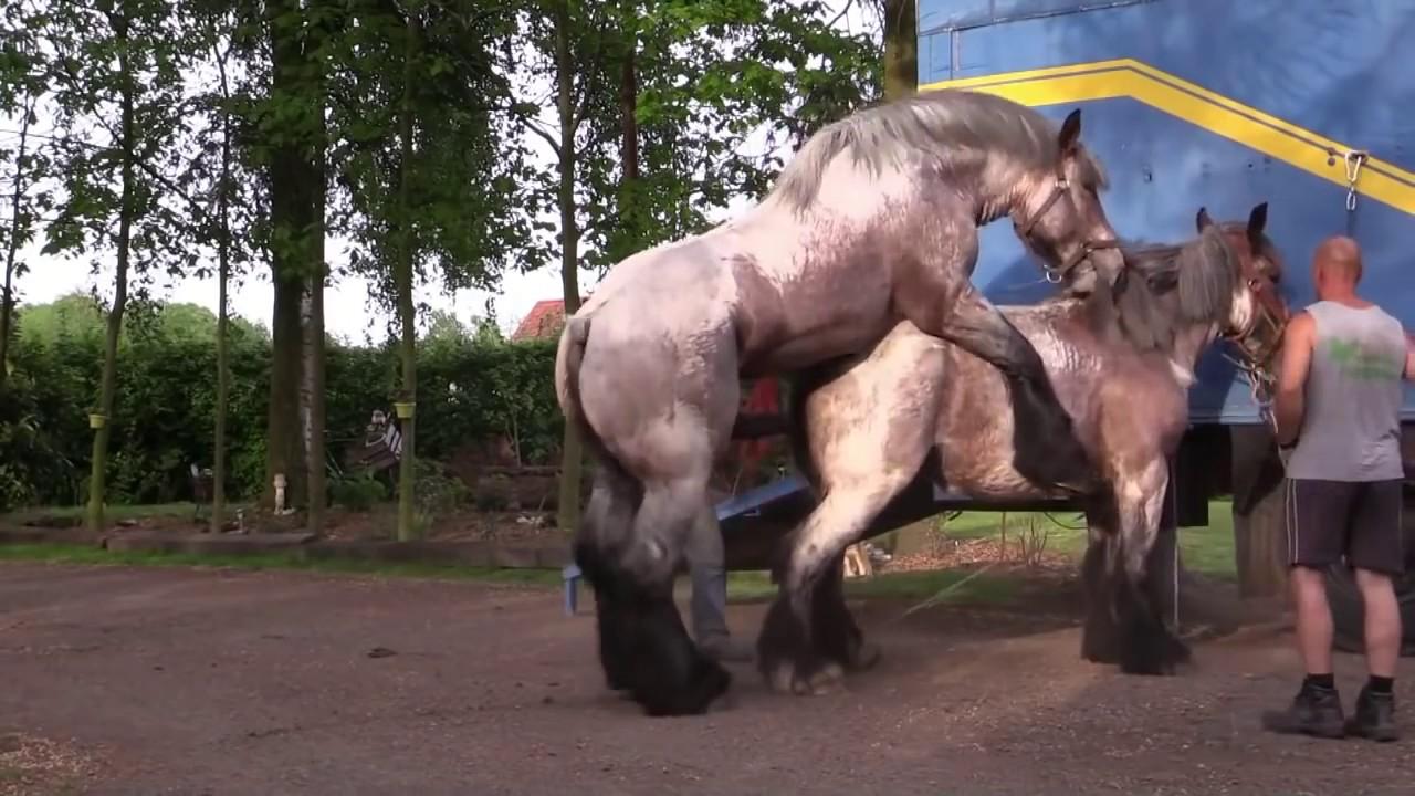 [Animal Mating ] Horse Mating Sexual