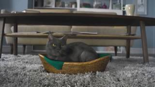 МегаФон «Рассерженный кот» Переходи на Ноль