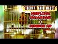 Gemercik Air Dan Suara Ngeplong Dimalam Hari Memancing Gacor Anis Macet Anda Hd  Mp3 - Mp4 Download