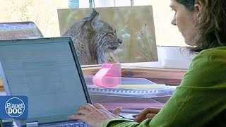 Iberian Lynx Documentary | Part 3