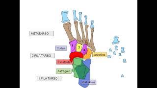 Las cuestionario de de piernas huesos
