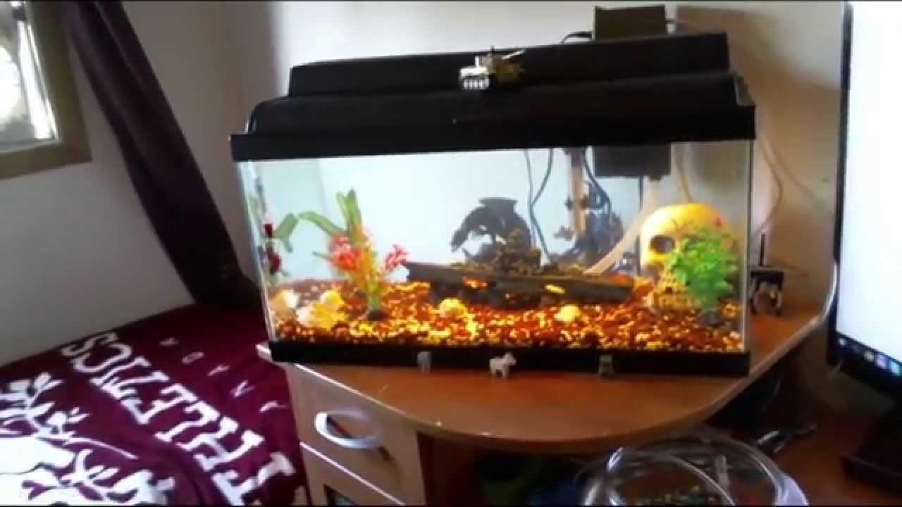 Finally get my 15 gallon fish tank setup youtube for 15 gallon fish tank