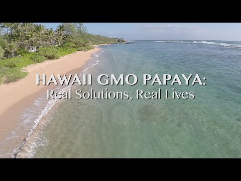 Hawaii GMO Papaya Real Solutions Real Lives