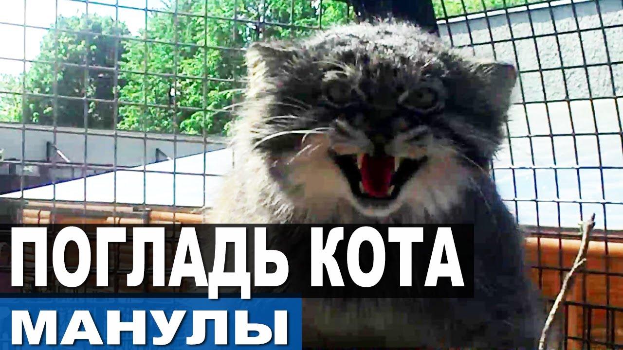 Как поймать дикого кота