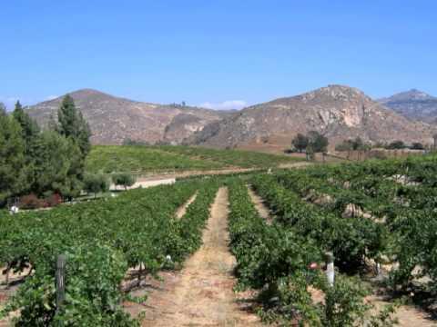 Orfila Vineyards -  San Diego California