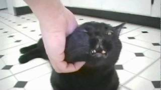 How To Annoy A Kitty Cat