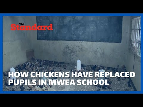 How chickens have replaced pupils in Mwea based school