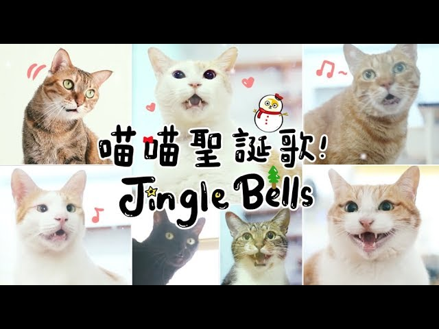 黃阿瑪的後宮生活-喵喵聖誕歌-jingle-bells