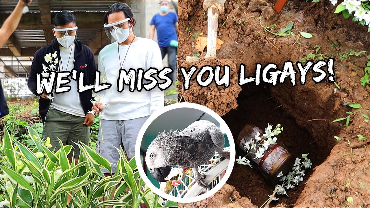 Burying Our Parrot On The Farm She Inspired Us To Get | Vlog #1008