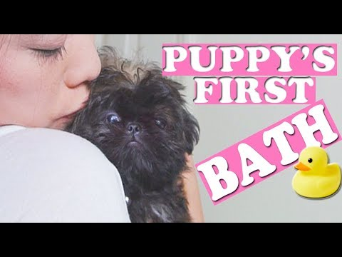 PUPPY GETS FIRST BATH | TOO CUTE