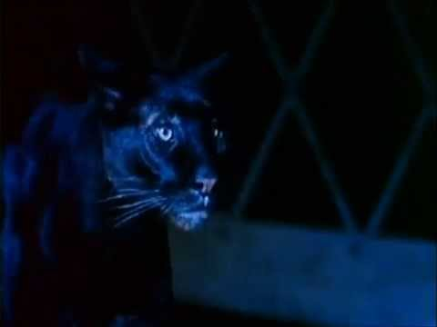 Cat People 1982)  Theatrical Trailer - YouTube