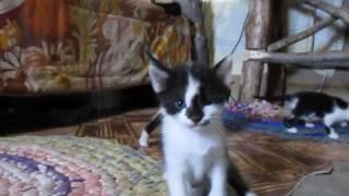 Котята играются, отдам котят в хорошие руки, Луганск