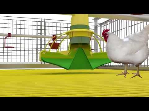 Cage Systems For Broilers Growin. Feeding System KoChibo