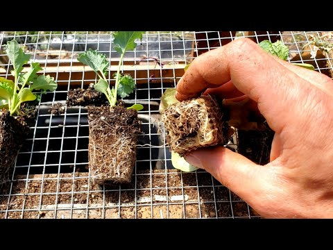 BEST Way To Start Seeds For Healthiest Seedlings