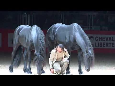 Frederic Pignon et ses etalons. Игры с лошадьми Фредерик Пиньон