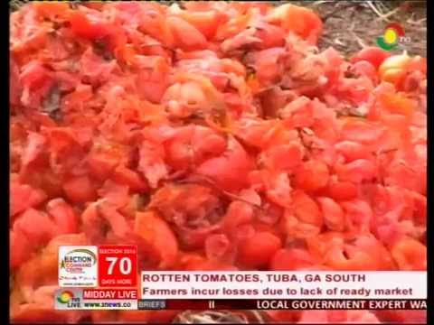 Tomato Farmers incur losses due to lack of ready market - 27/9/2016