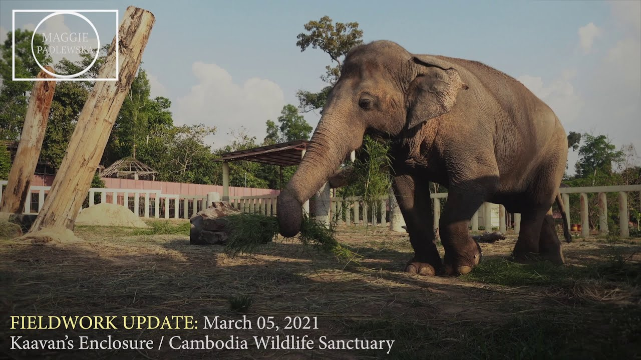 #KAAVAN: Fieldwork Update (March 5, 2021)